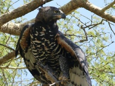 Zeekoepan Safaris 10