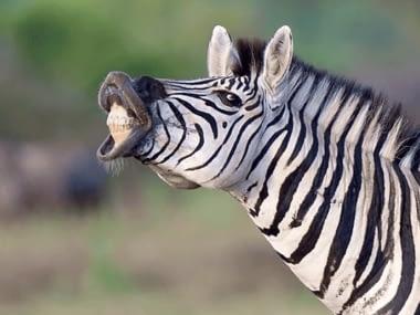 Zeekoepan Safaris 8