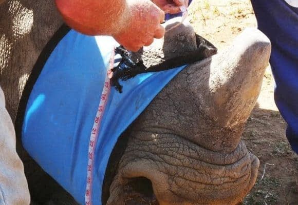 Saving Our Rhinos 4