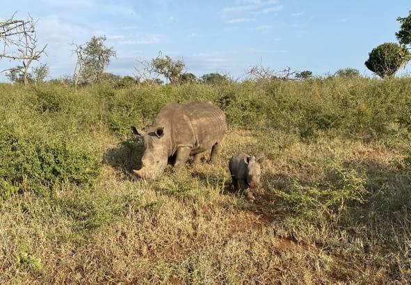Saving Our Rhinos