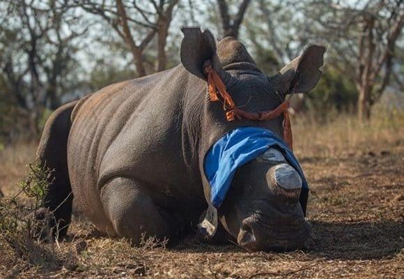 Saving Our Rhinos 5
