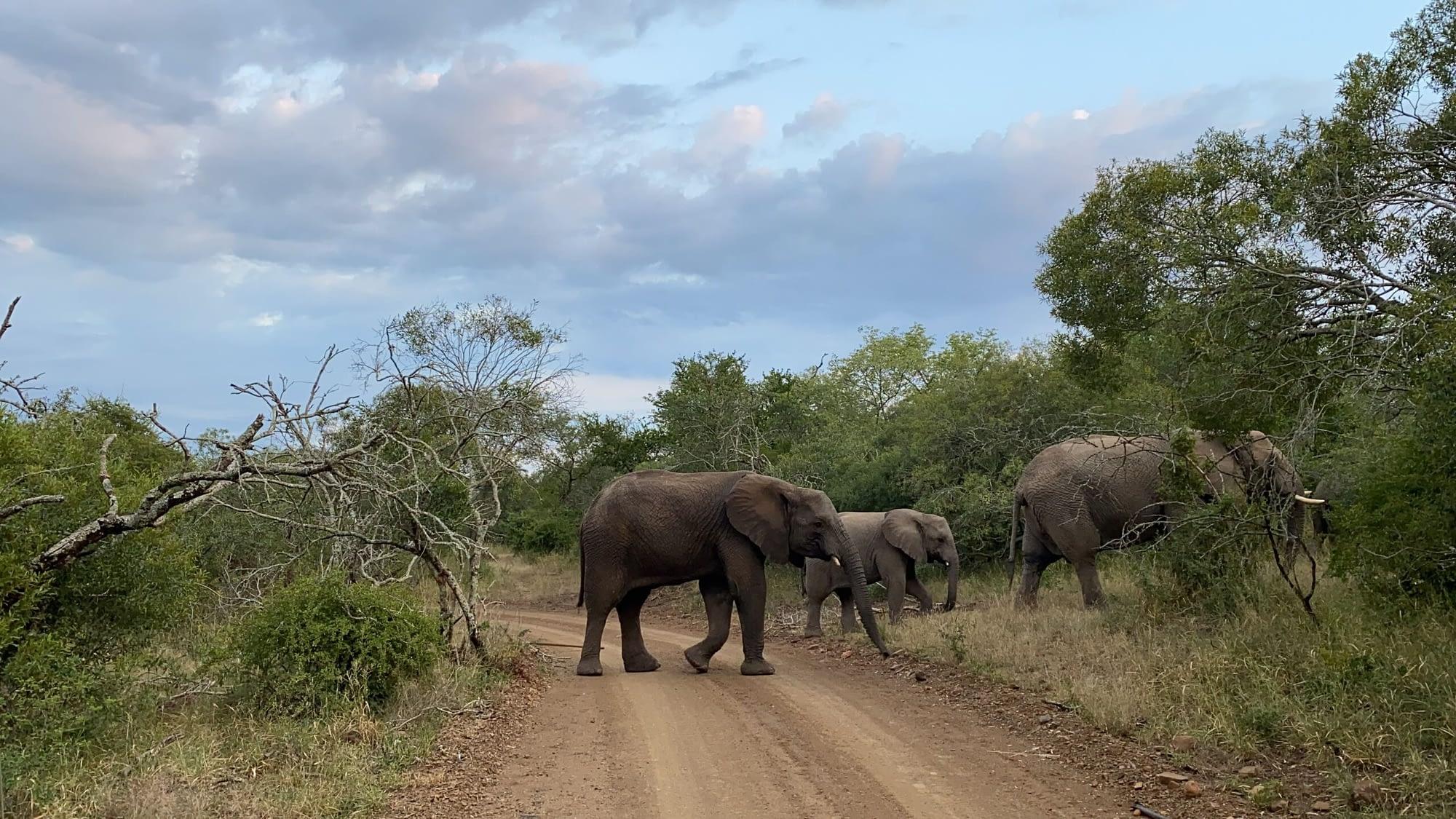Zeekoepan Safaris 2