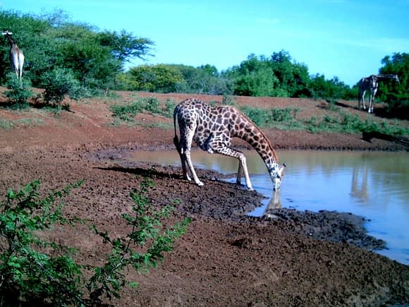 Wildlife 10