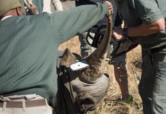 Saving Our Rhinos 3