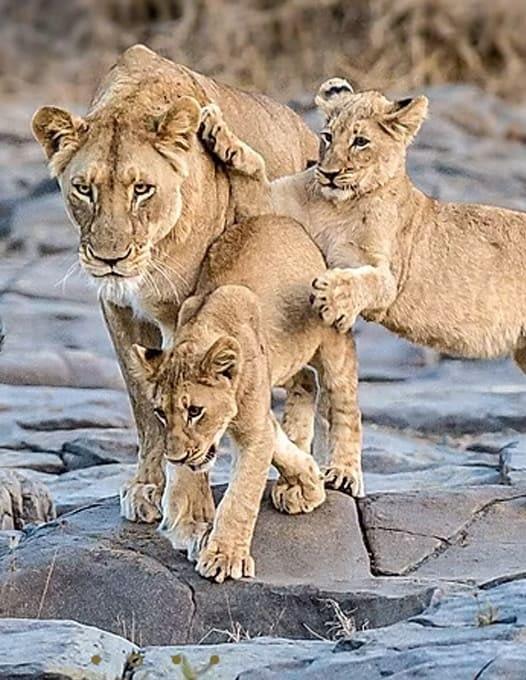 Zeekoepan Safaris 5